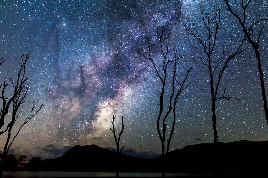 Silhouetted dead trees frame the Milky Way
