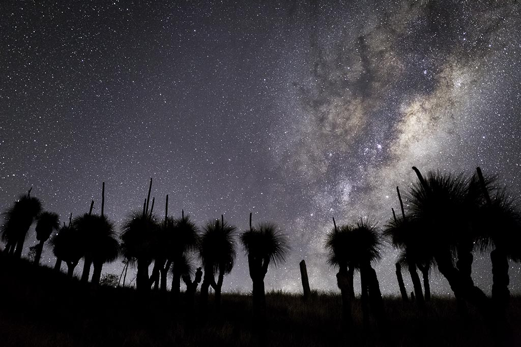 Grass Trees and the Milky Way