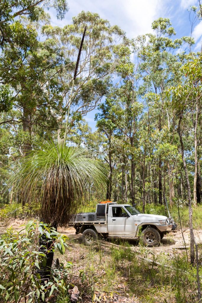Grass trees are common along the A Break track 4WD TRACKS BRISBANE