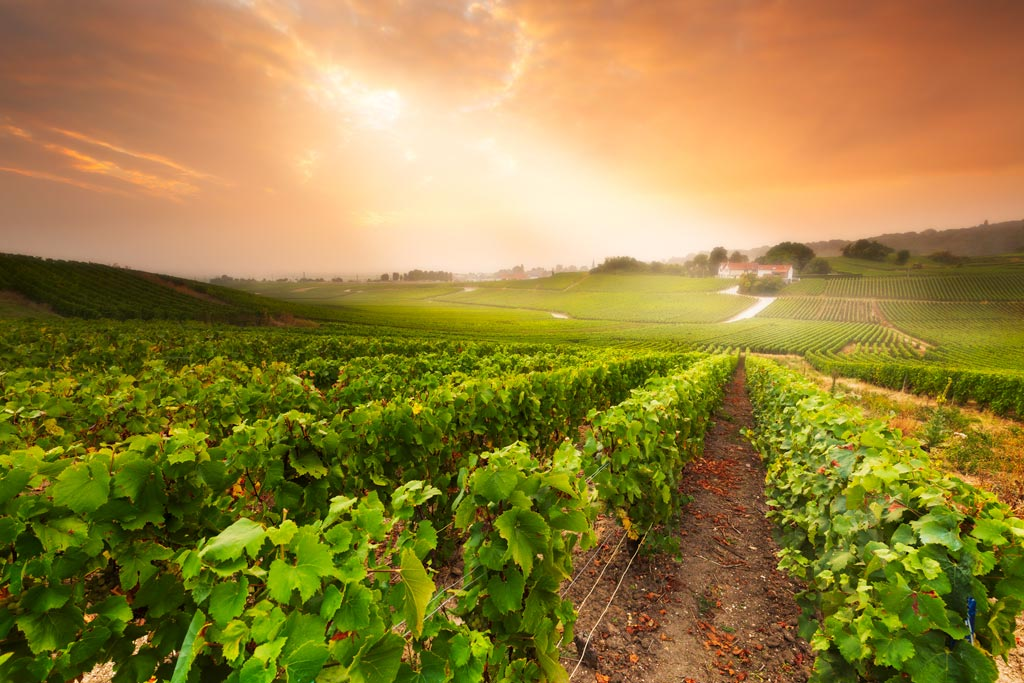 Vineyard at sunrise 6 tips to improve your landscape photography