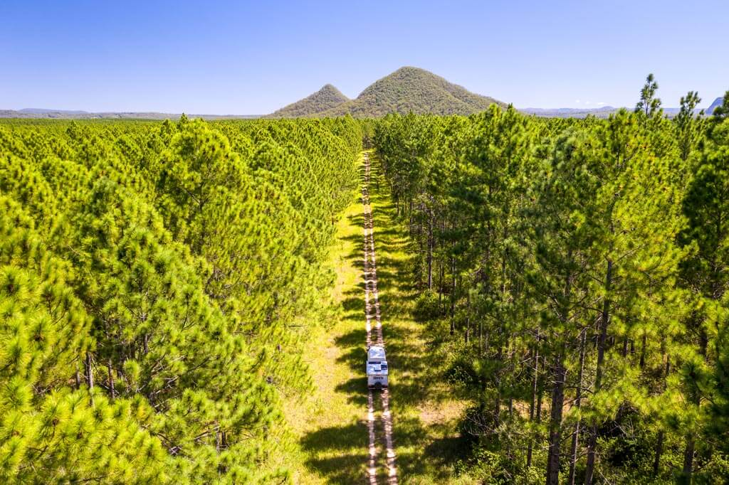 Aerial view of the pine tree plantations and the Glasshouse Mountains