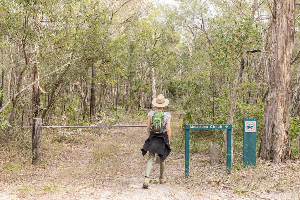 Start of the Melaleuca Walk at Burrum Coast National Park