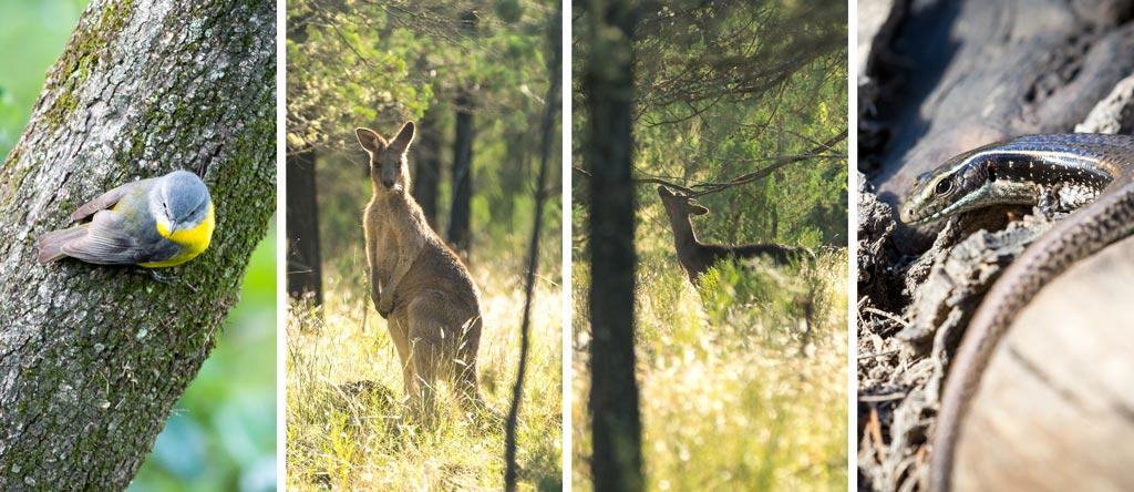 Different animals found in Sundown National Park