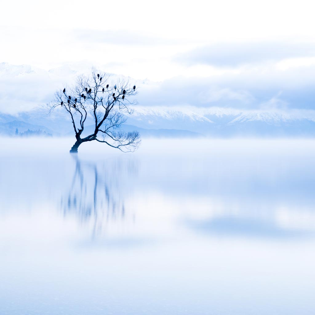 A lone tree in a lake on a freezing cold morning