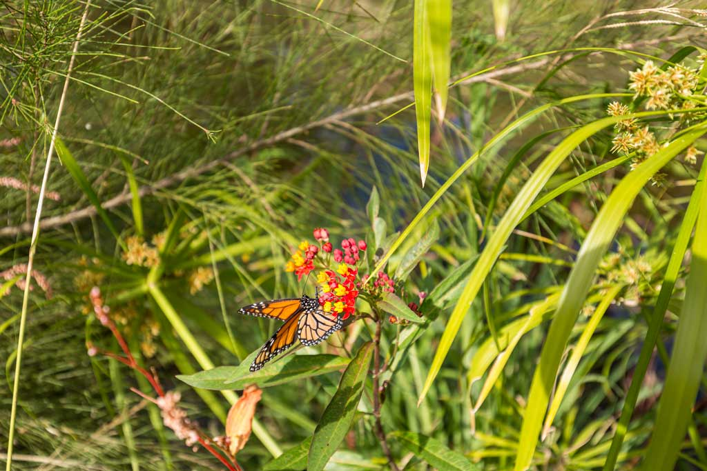 a butterfly in the long grass