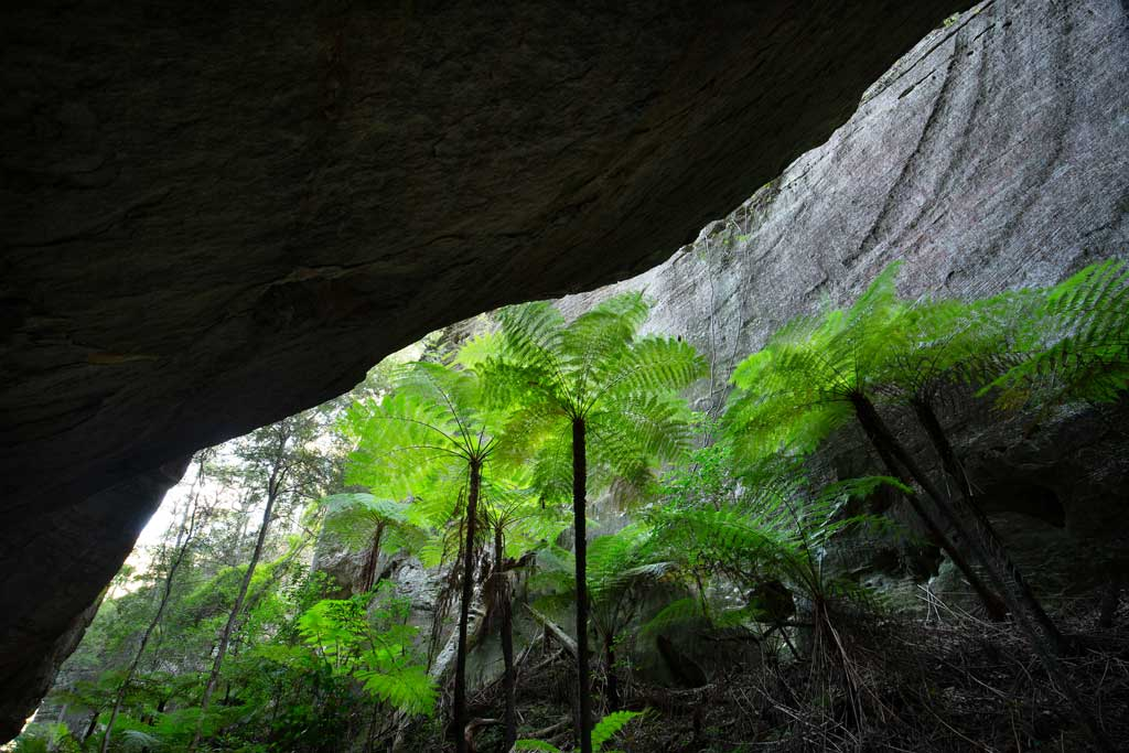 Overhanging rock and tree ferns
