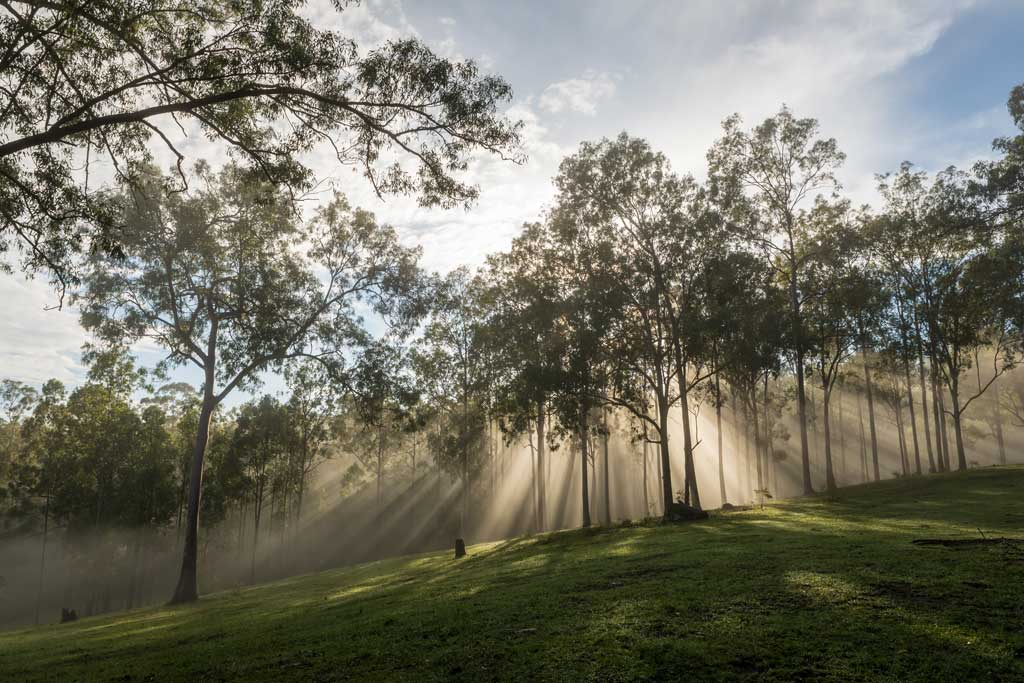 beams of light through the trees at sunrise